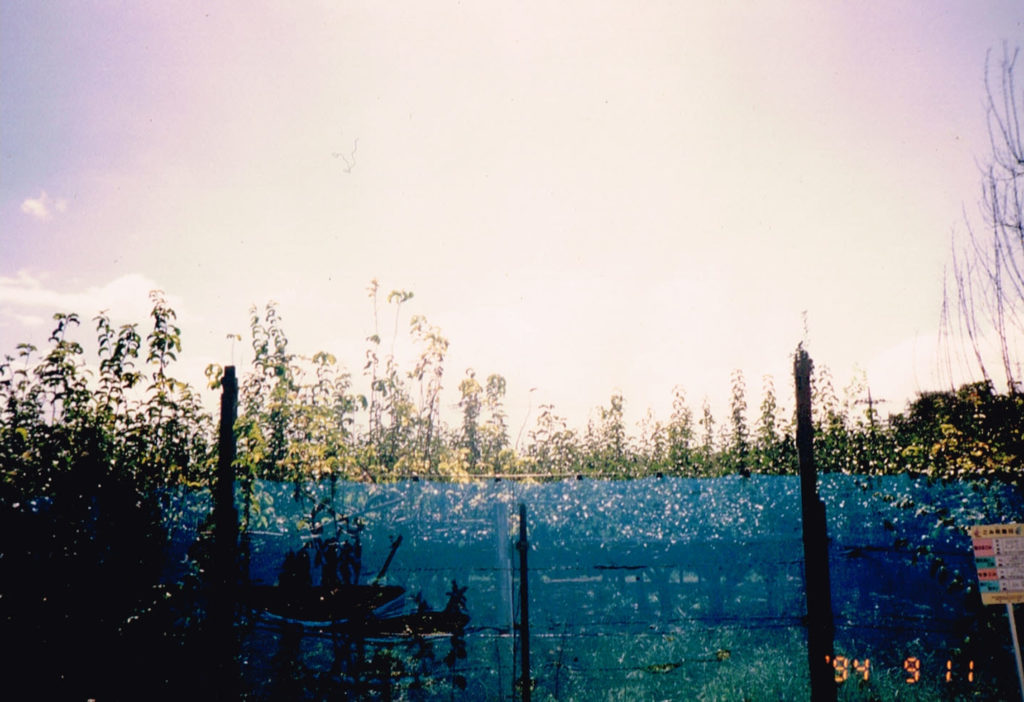 Japanese pear field and trash sigh